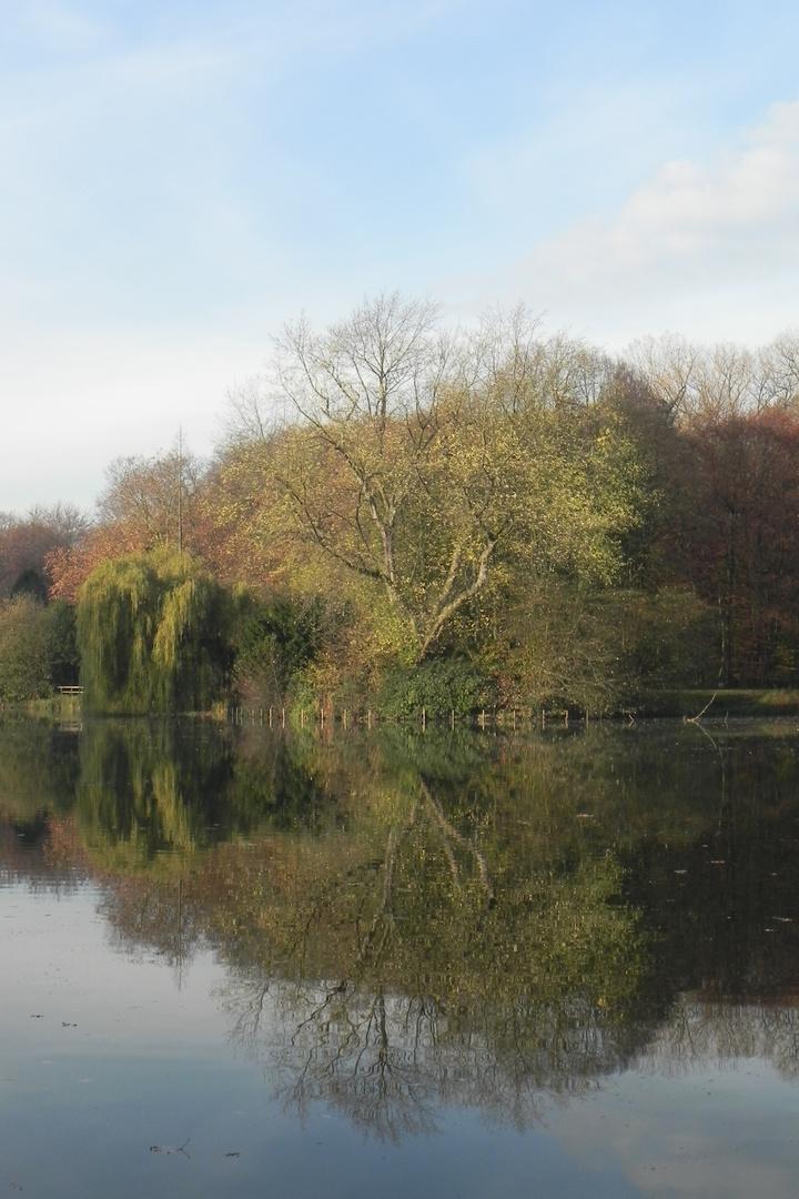 Teich bei Schloss Wittringen 1 - November 2011