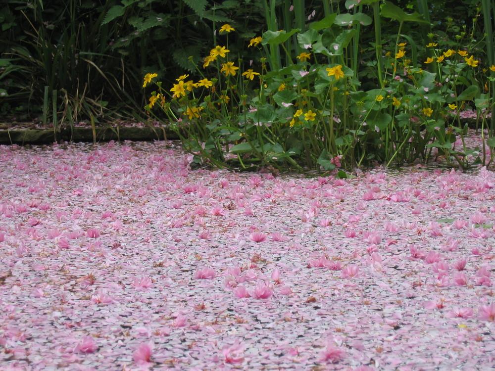 Teich Im Botanischen Garten In Minden Foto Bild Landschaft Bach