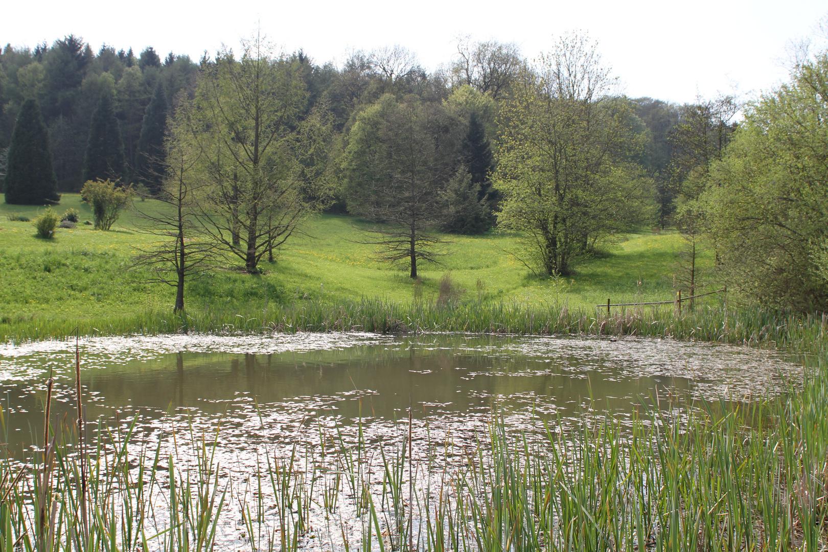 Teich im Botanischen Garten in Ulm
