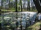 Teich im Frühling