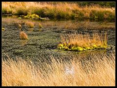 Teich im Platte Venn