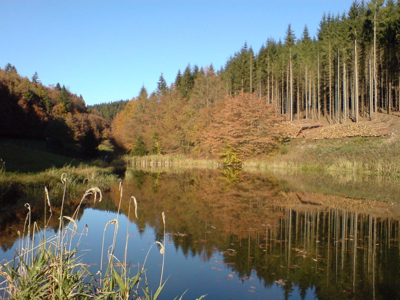 """ Teich im Thüringerwald "" Foto 1"