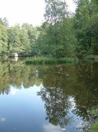 Teich im Wald