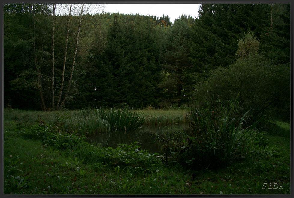 Teich in der Nachbarschaft