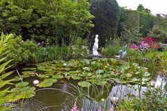 Teich in meinem Garten