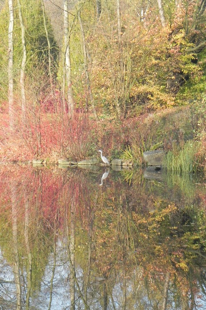 Teich mit Reiher bei Schloss Wittringen - November 2011