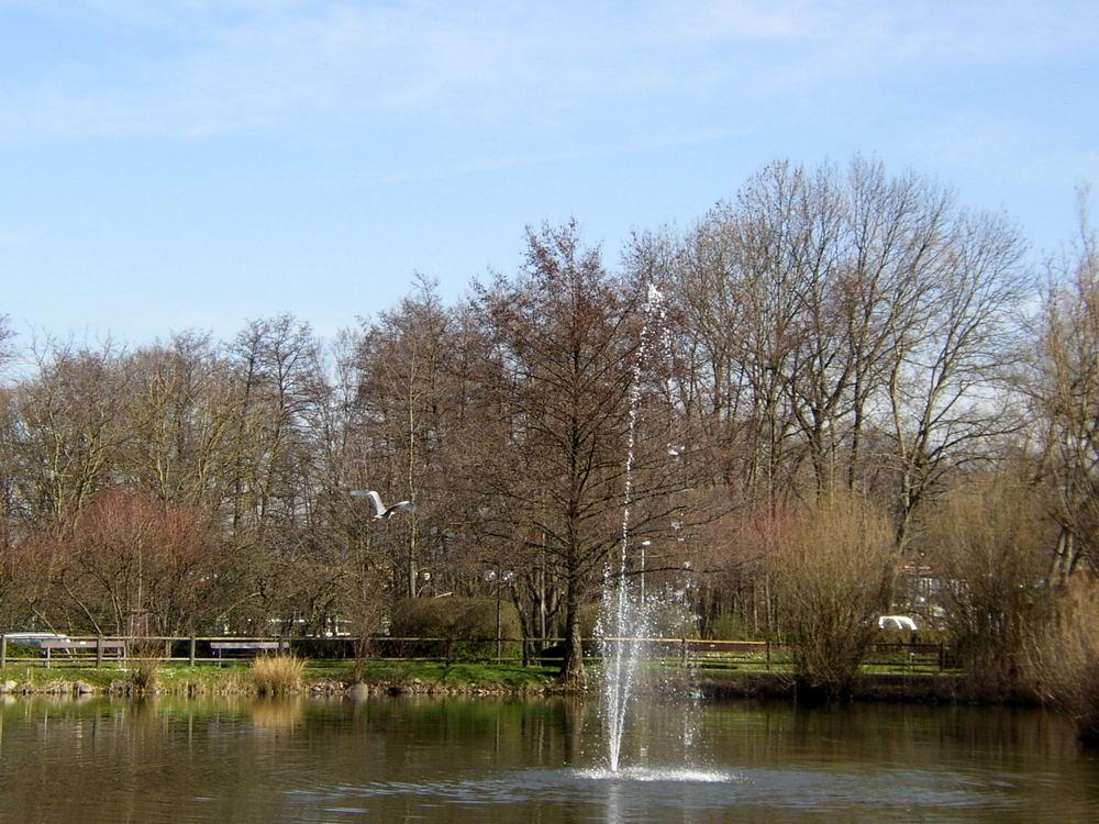 Teich vom Augustinum in Freiburg/St. Georgen