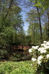 Teiche im Tiergarten (2)