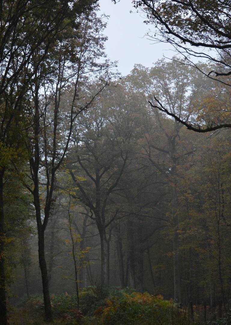 Temp d'automne