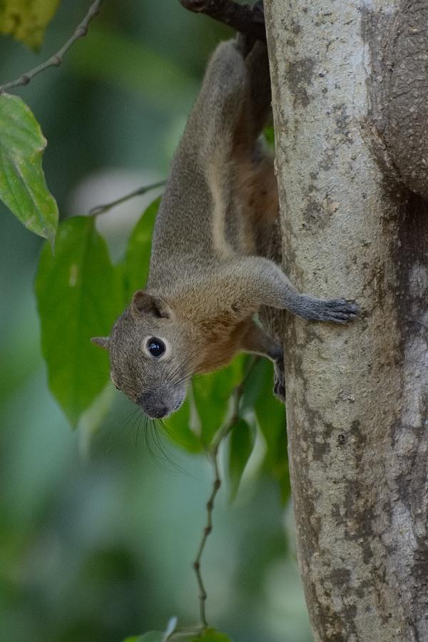 Tempelhörnchen :-)