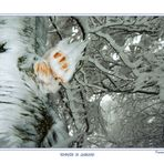 Tempesta di ghiaccio...