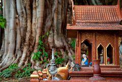 Temple and Banyan Tree