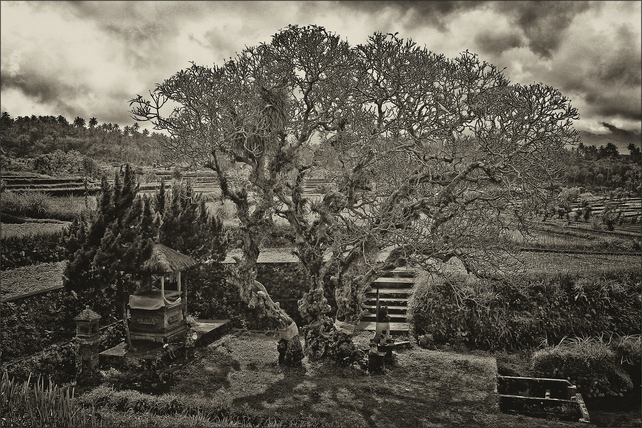 * Temple in the rice fields *