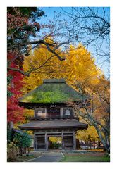 Temple to get in autumn -I