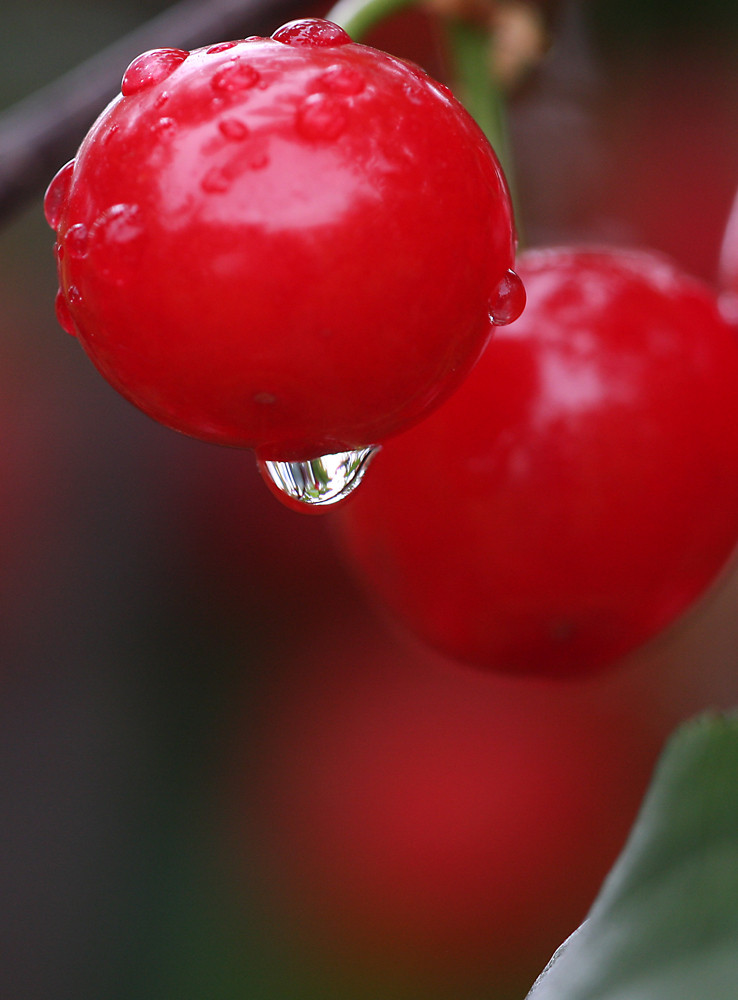Ten moments in east Hungary: Cherry after rain