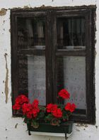 Ten moments in east Hungary: Window with geranium