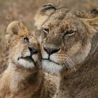 TENDRESSE AFRICAINE