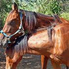 Tenerezze equine