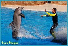 Teneriffa - Delfine im Loro Parque [more pics: www.a-k.de]
