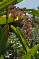 Teneriffa - La Orotave - botanischer Garten