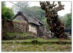 Tenganan, das Bali-Aga Dorf auf Bali