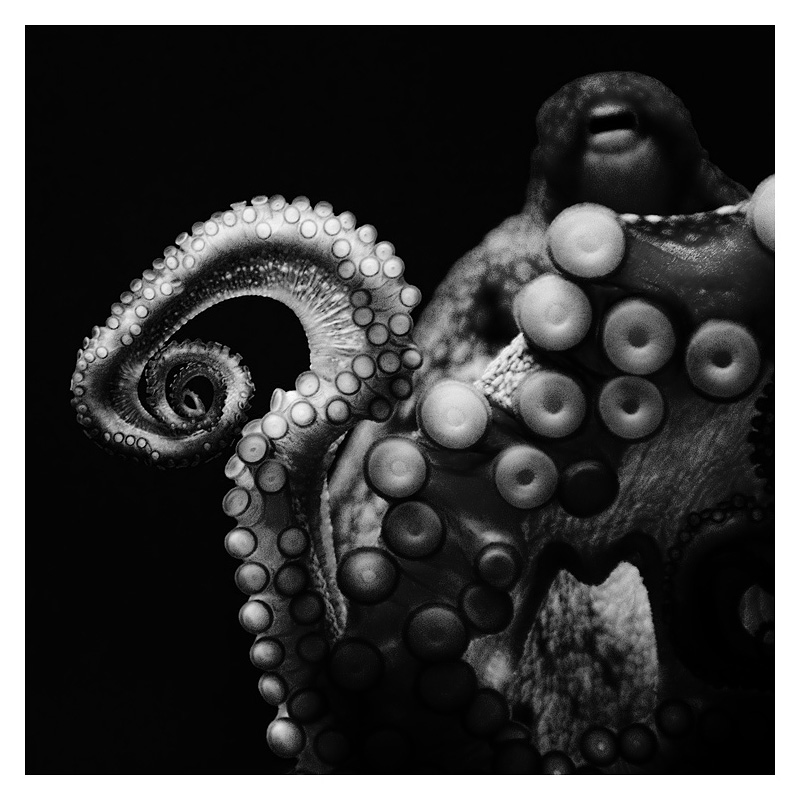 tentacular
