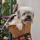 tequila el perro viajero