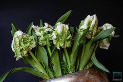 TER_3563 Tulpen 2 #