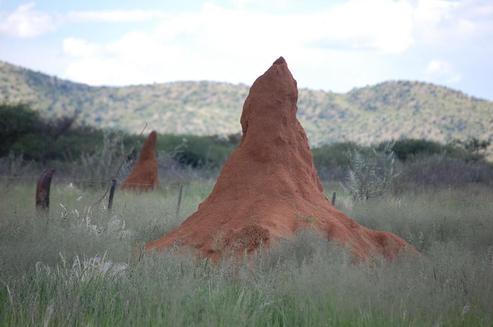 Termitenhügel in Namibia