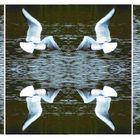 Tern turn around