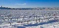 Terra de vins