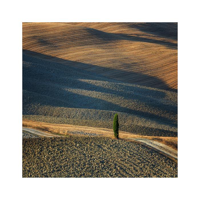 Terra Toscana V