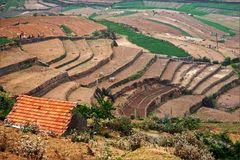 Terrassenfelder in den Palani Hills