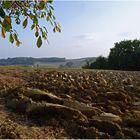 Terre arable dans le Gers
