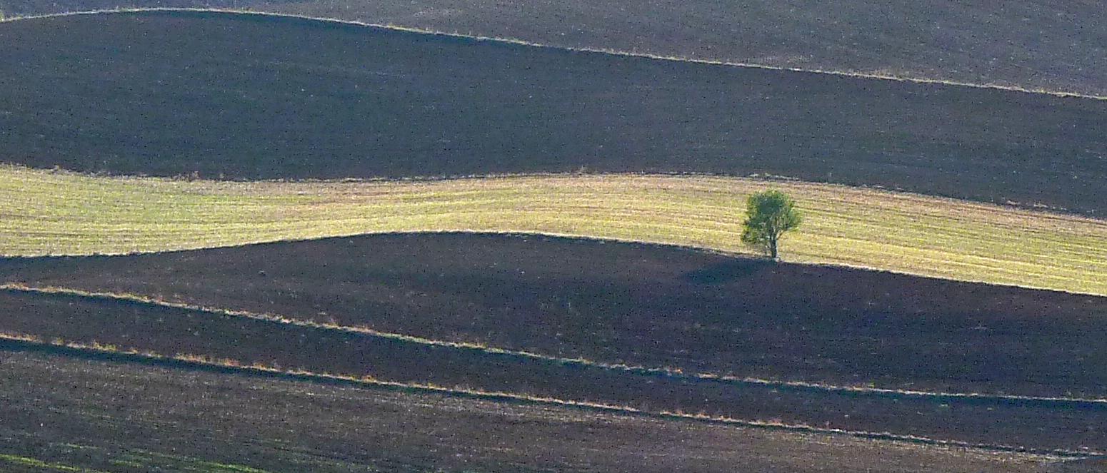 Terre castigliane