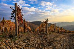 terre da vino (10)