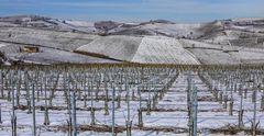 Terre da vino - sottozero (2)