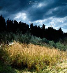 Terre di Siena 3