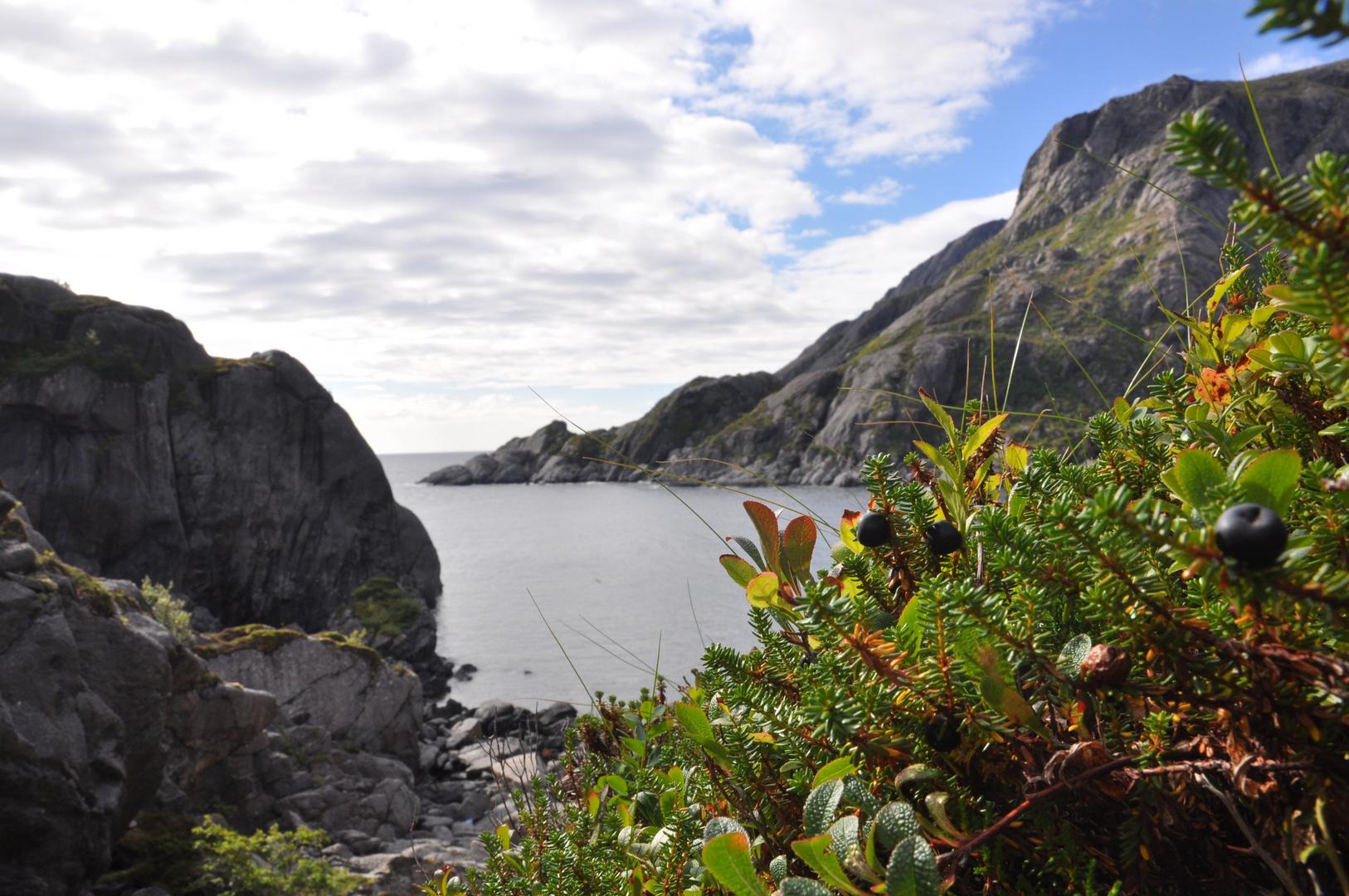 Terre et mer des Lofotens
