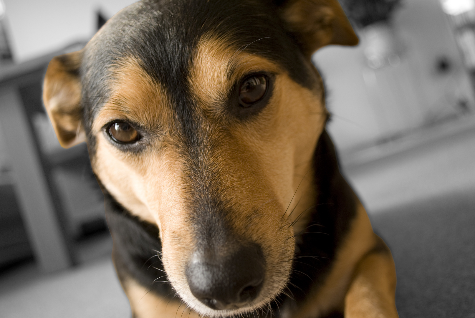 Terrier 2