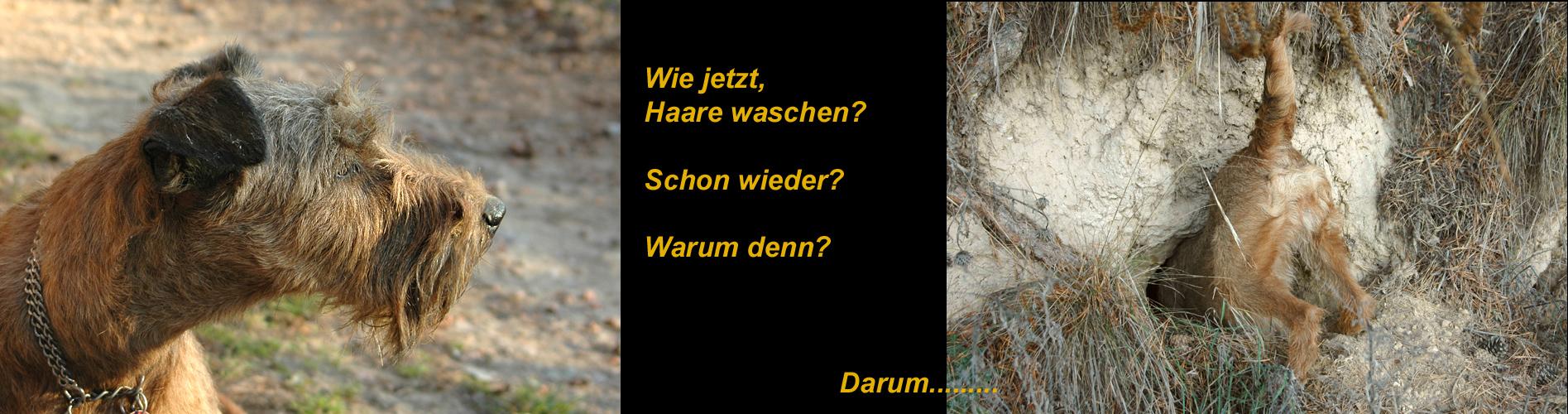 Terrier.....