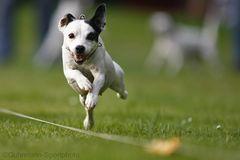 Terrier-Rennen 2