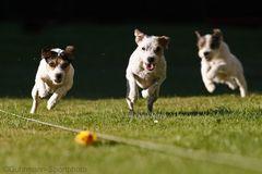 Terrier-Rennen