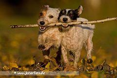 Terrierpower im Herbst