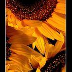 Tertulia floral