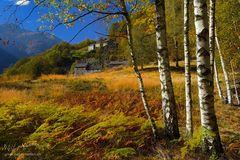 Tessiner Herbstfarben