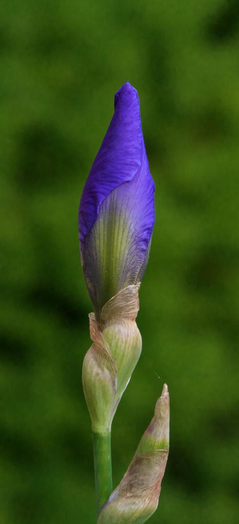 test SIGMA 120-400 fleur