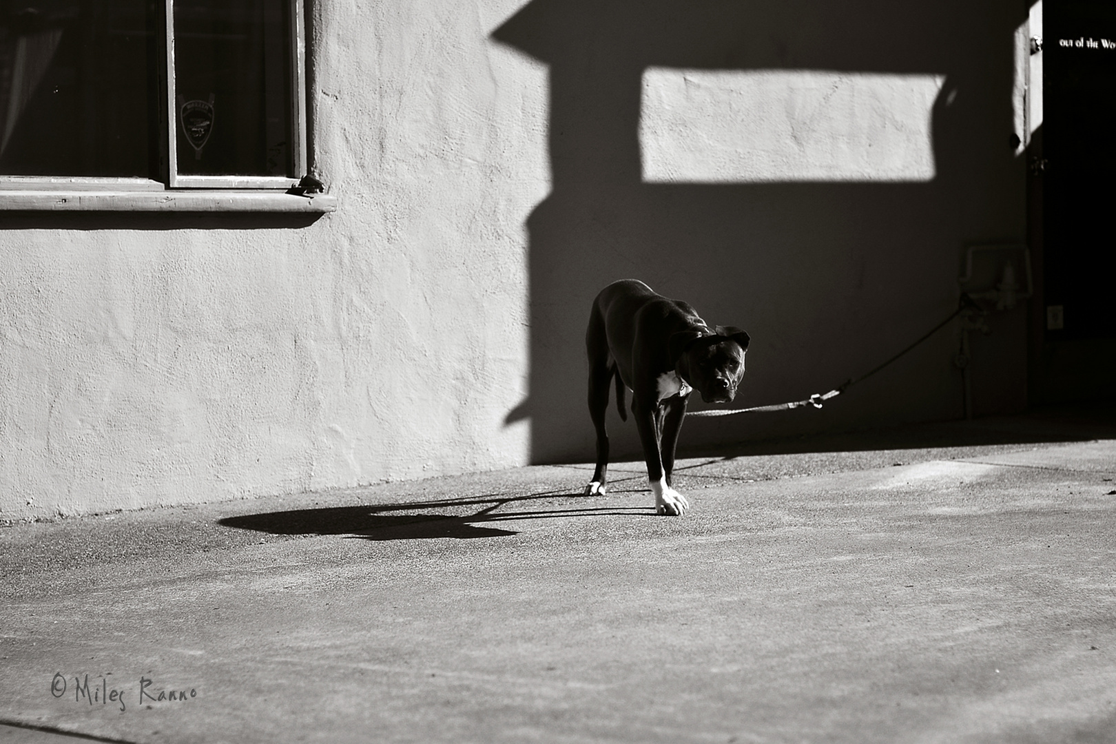 Tethered To A Shadow