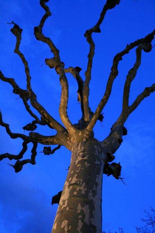Teufelsbaum