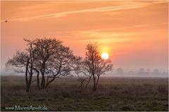 Teufelsmoor Sunset